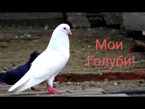 #Astrakhan #Pigeons Голуби ушли с игрой!