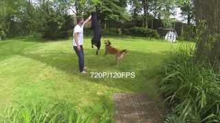 Rottweiler Jump (720p/120fps)