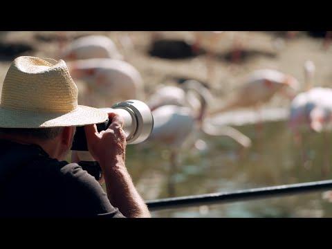 Canon EOS-R6 und neue RF Tele Objektive