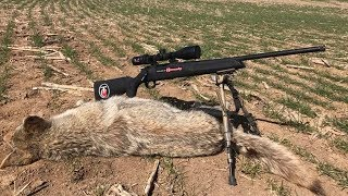 13. Making the Running Coyote Shot! | More Secrets For Shooting Coyotes! Part 2