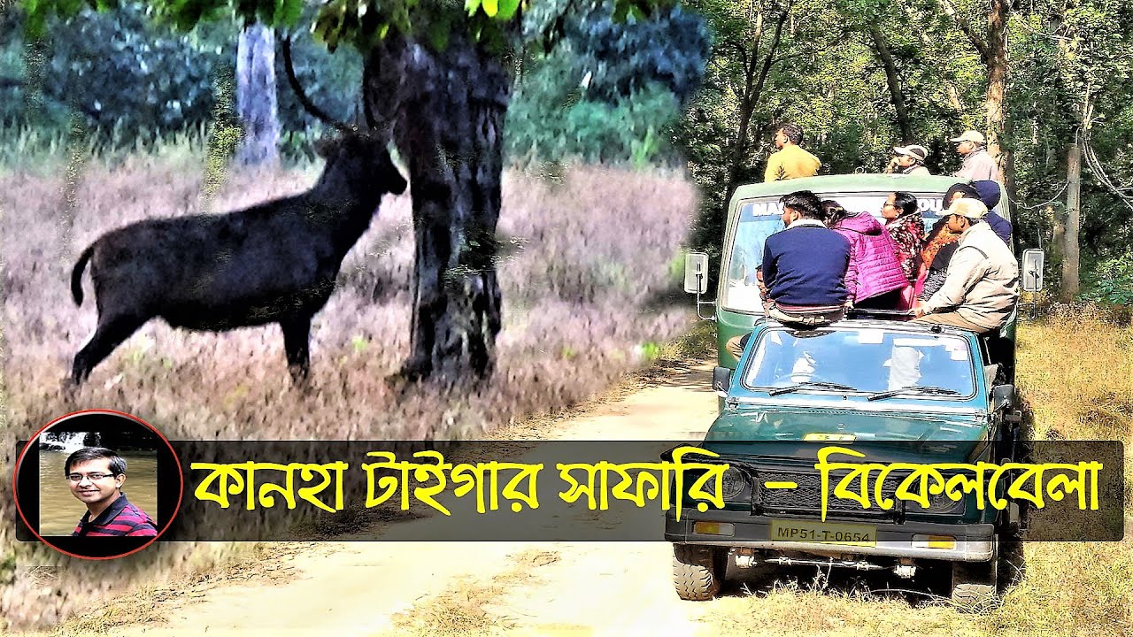 Kanha Tiger Safari | কানহা টাইগার সাফারি  | Evening Jungle Safari Kanha | Kanha Tour | MP Tourism