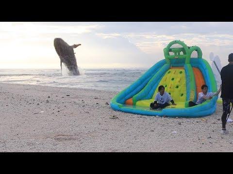 無人島でクジラ出現するドッキリww