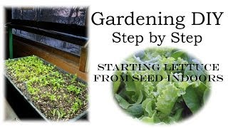 How to Plant Lettuce from Seed