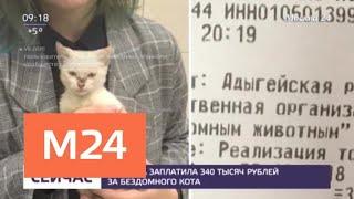 Девушка заплатила 340 тысяч рублей за бездомного котенка - Москва 24