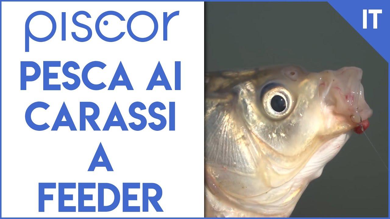 pastura pesca carpa carassio aroma dolce lago fiume carp fishing canna bolognese