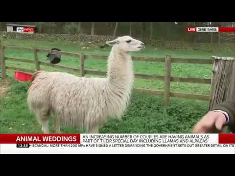 The new trend for animals at your wedding - Dan Whitehead/Rebecca Williams
