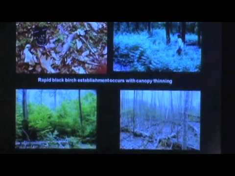 Forest Invaders: How Invasive Species are Reshaping the Wooded Landscape of New England