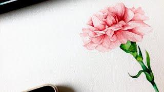 [수채화]카네이션 그리기| Watercolor pain…
