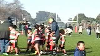 Jr Ripper Rugby