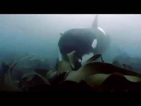 Schiller - Zaubergarten der Schwertwale
