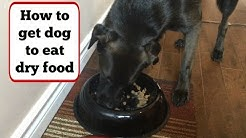 How to Get Your Picky Dog To Eat Dry Food (Using Peanut Butter) + Dog Eating From Spoon
