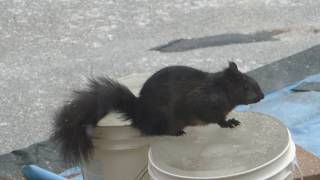 Finding Water: Squirrel's Toขgh Life in Canadian Winter
