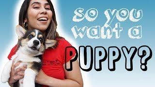 IS A PUPPY HARD WORK? Training Top Tips w/ Corgi Puppy