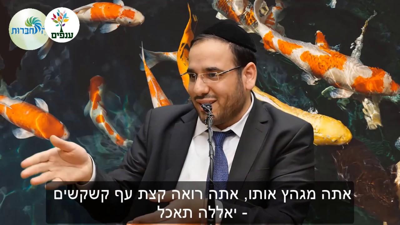למה הרב דוד פריוף מכור בעל כורחו לדגים? - סיפור מצמרר!
