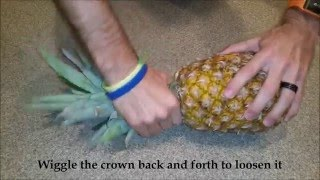 How to Plant & Grow a Pineapple Top (Indoor & Outdoor Directions)