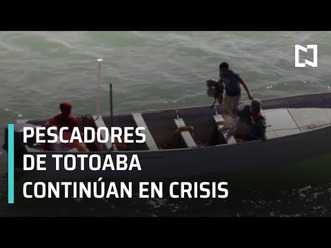 Tráfico de Totoaba; pescadores pierden subsidio federal - En Punto con Denise Maerker