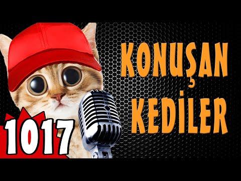 460K Abone Özel - Konuşan Kediler 1017 - Komik Kedi ları