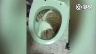 貓咪躲在馬桶裡睡覺結果被主人用方言責備,大聲告訴我,這喵叫什麼名字