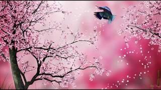 Sakura (Sonbeat) 30 phút thumbnail