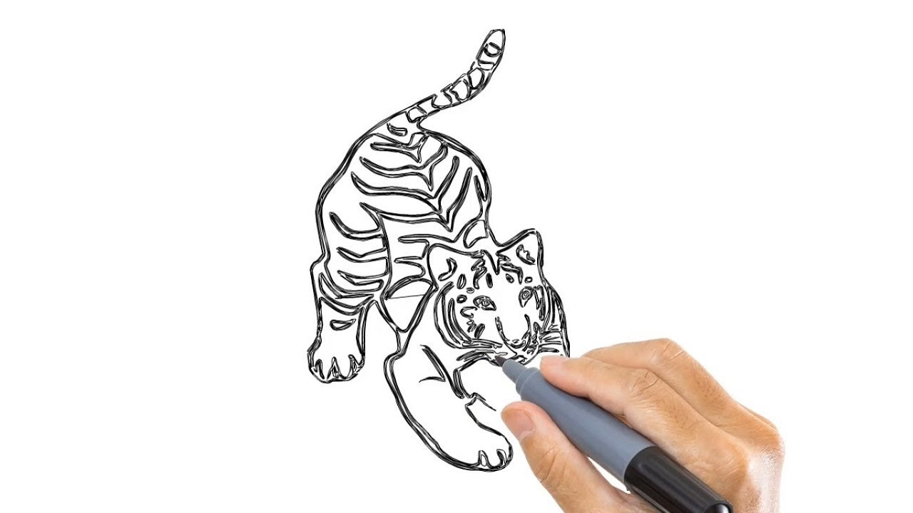 Arts For Kids How To Draw A Tiger Easy Step By