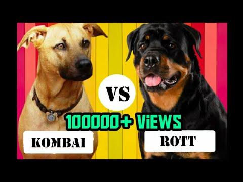 Kombai vs Rottweiler | தமிழில் | comparison and facts | PETS ULAGAM TAMIL |