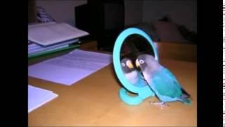 Смешные попугаи  Попугай и кошка  Самое смешное видео со всего мира  Funny parrots 1
