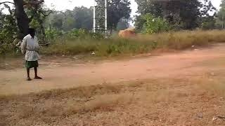 Sambalpuri WhatsApp  video