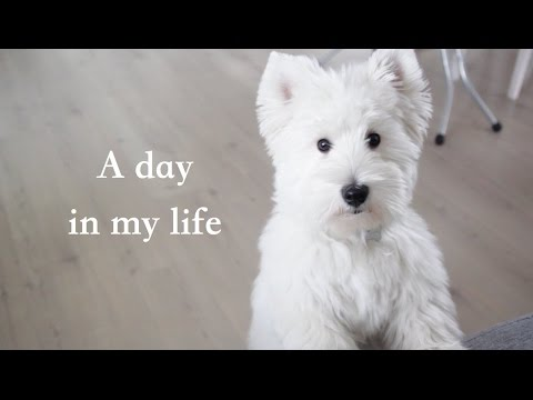 A day in dog's life