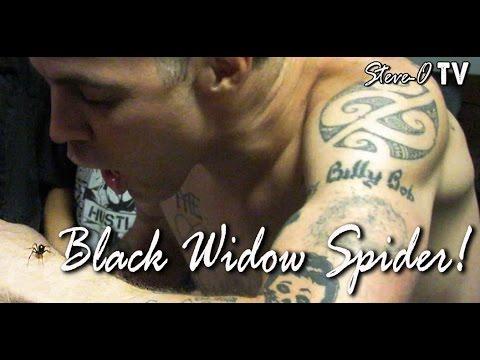 Black Widow Spider! - Steve-O