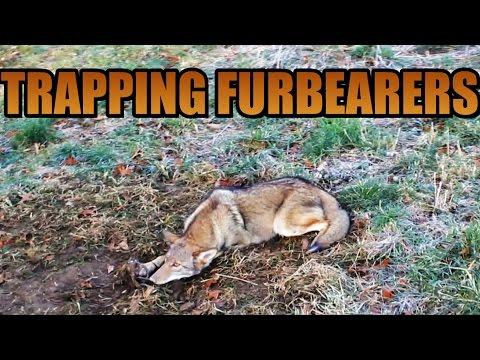 Trapping Furbearers 2016 - Adam