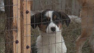Частный приют для бездомных животных в Саранске нуждается в финансовой помощи