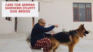 Basic Care For German Shepherd | Fluffy Puppy's | Dog breeding Farm | Pet Care | Harwinder S Grewal