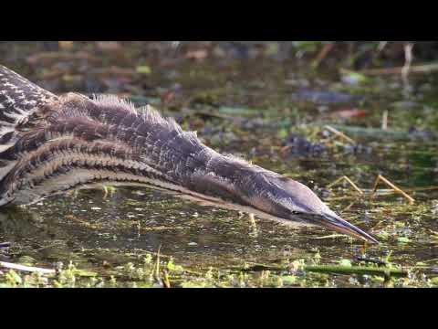 Improving the wetlands of Jones Bay