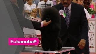 World Dog Show 2013 - Group Ix Judging