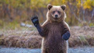 Эти забавные... Медведи...