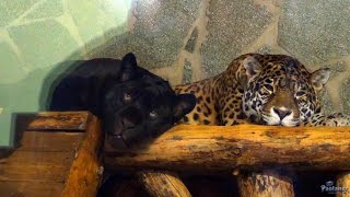 Ленинградский зоопарк. В мире животных (2016)
