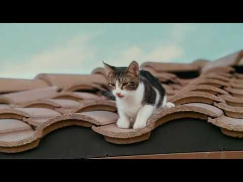 youtube filmek - Kém a szomszédban (2010)-Teljes film magyarul