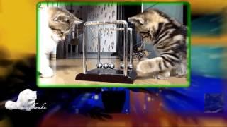 Смотреть видео про веселых и смешных кошек