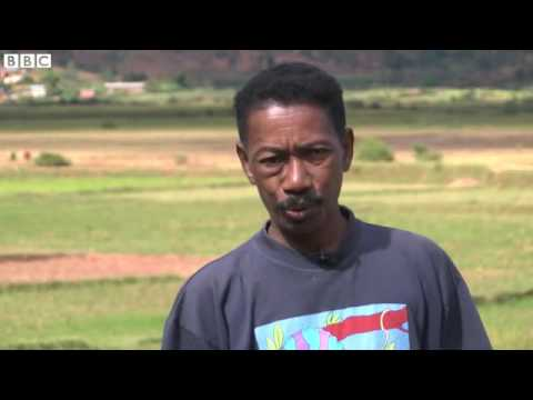 Farmers keen to exploit Madagascar's organic riches   BBC News