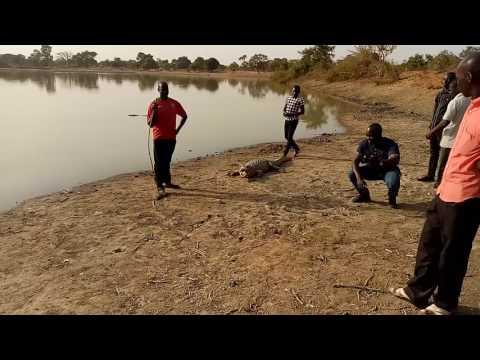 Ouagadougou bourkina Faso crocodiles lake