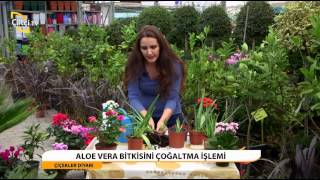 ÇİÇekler Dİyari - Aloe Vera