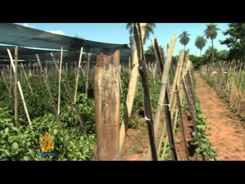 Paraguay farmers demand land reform