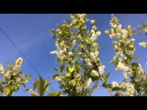 Два фактора для пчел и растений про нектар