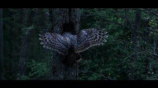 Dans les bois Film Complet POZ VO & VF 2160p En Francais youtube