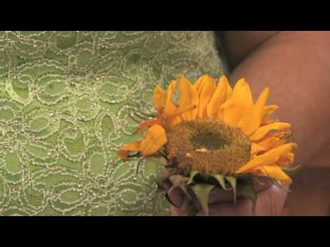 Flower Gardening Tips : How to Grow Common Sunflower (Helianthus Annuus)