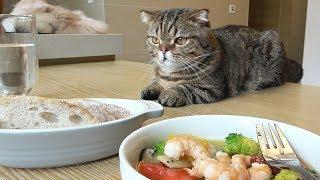 일곱 고양이와 브런치 먹는 날 : 감바스