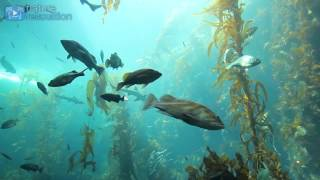 4K AQUARIUM UNDERWATER SCENE + MUSIC | 2 Hour Nature Relaxation™ Film