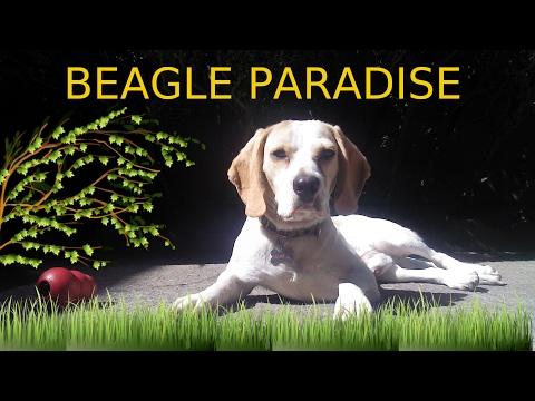 Kranky 2.0 - Beagle Paradise