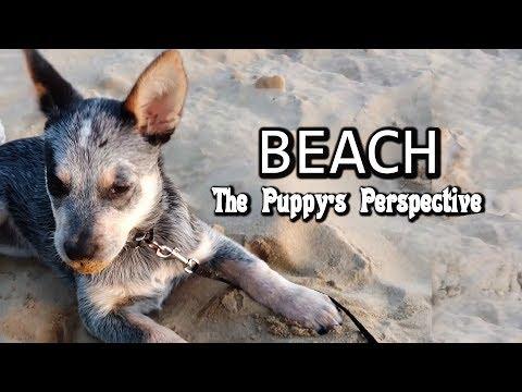 Beach - Puppy Perspective