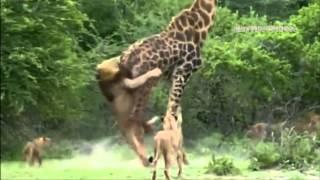 Лучшие моменты с животными